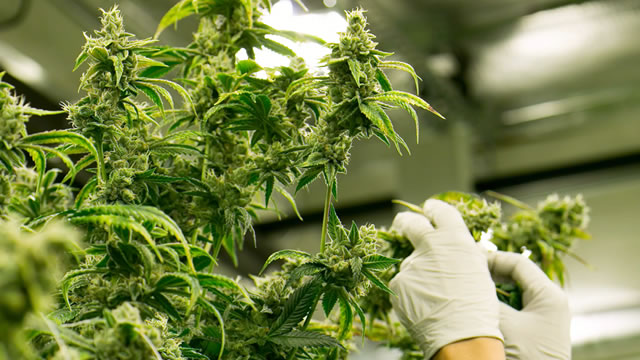 Canopy Growth Group continues to burn money faster than it is making it