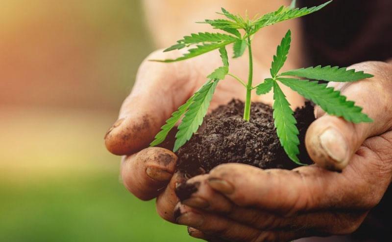 Top Marijuana Stocks to Watch